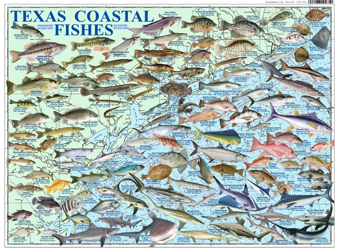 Saltwater fish of texas posters saltwater fishes of for Texas freshwater fish